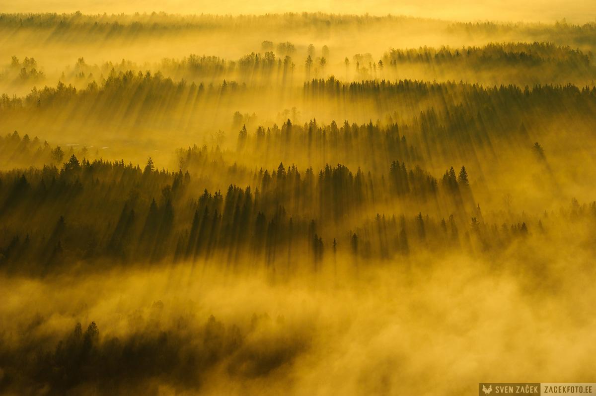 kuldne, udu, kollane, aerofoto, loodusfotograaf, sven zacek, zacekfoto